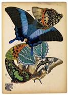 Butterflies Plate 4