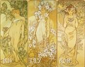 Iris Lily Rose