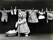 Kitty Laundry