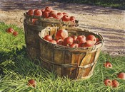 Apple Bushels