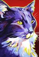 Cat Kelsier
