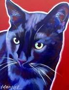 Cat Caleb