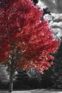 New England Autumn II