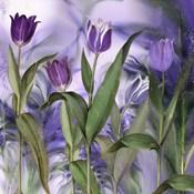 Purple Dream II