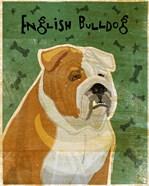 English Bulldog Tan and White