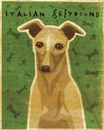 Italian Greyhound - Fawn