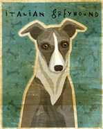 Italian Greyhound - White and Grey