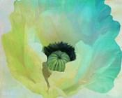 Poppy Gradient I