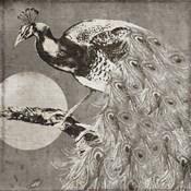 Moon Peacock