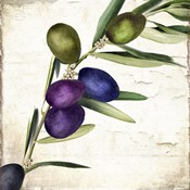 Olive Branch III