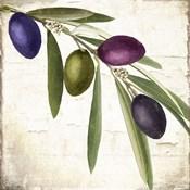 Olive Branch IV