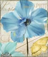 Blue Mountain Poppy
