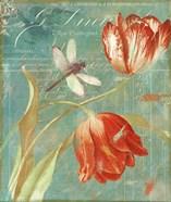 Mandarin Tulips
