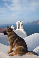Greece, Santorini, Oia, Dog, Blue Domed Churches
