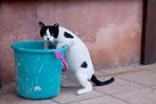 Greece, Crete, Chania, Old Harbor, Cat