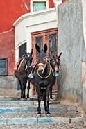 Mules, Imerovigli, Santorini, Greece