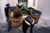 Pack Mule at Market, Santorini, Greece