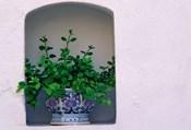 Alcove Plant, Santorini, Greece