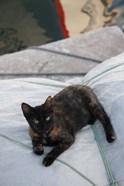 Greece, Paros, Naoussa, Cat on Boat Sails