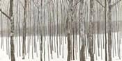 Woods in Winter BW