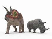 An adult Triceratops Compared to a modern adult White Rhinoceros