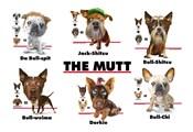 The Mutt