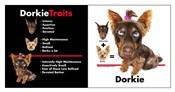 Dorkie Traits