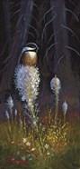 Beargrass Chickadee