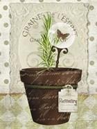 Herb Pots Rosemary