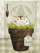 Herb Pot Thyme