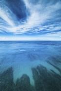 Waikiki Daytime Reef Vertical