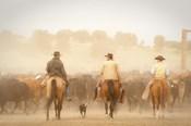 Cowboys Best Friend