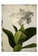 Gardenia Grunge I