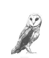 Wildlife Snapshot: Owl