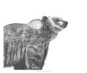 Wildlife Snapshot: Grizzly