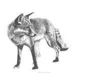 Wildlife Snapshot: Fox