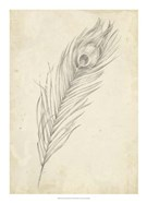 Peacock Feather Sketch II