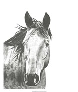Wildlife Snapshot: Horse I