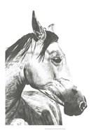 Wildlife Snapshot: Horse II