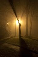 Light Through The Mist
