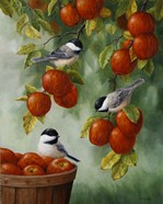 Apple Harvest Chickadees