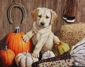 Pumpkin Harvest Puppy