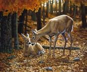 Autumn Innocence II
