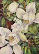 Georgia Magnolias