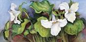Woodland Trillium A