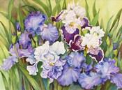 Irises in Shades of Lavender
