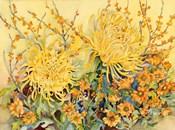 Fall Chrysanthumums