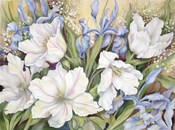 White Tulips/ Blue Iris