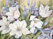 White Tulips/ Blue Iris
