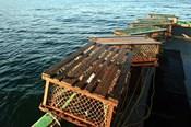 Nova Scotia, Cape Breton, Lobster Traps